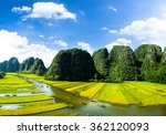 Rice field and NgoDong river in NinhBinh, Vietnam