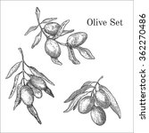 ink hand drawn olive set | Shutterstock .eps vector #362270486