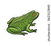 vector frog   Shutterstock .eps vector #362312840