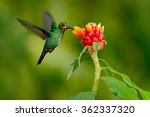 hummingbird green crowned... | Shutterstock . vector #362337320