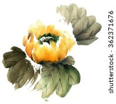 water lily. watercolor and ink... | Shutterstock . vector #362371676