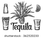 glass of tequila with salt and... | Shutterstock .eps vector #362520233