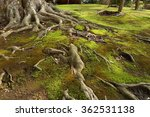 surreal tree roots from big... | Shutterstock . vector #362531138