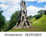 the old tree which is in a park ... | Shutterstock . vector #362552804