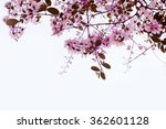 lagerstroemia floribunda flower | Shutterstock . vector #362601128