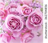 Stock photo beautiful purple rose flower close up 362704856