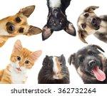 group of pets peeking | Shutterstock . vector #362732264