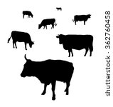 silhouette of cows grazing on a ...   Shutterstock . vector #362760458