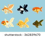Various Goldfish Strains In...