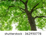 green natural background of... | Shutterstock . vector #362950778