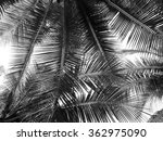 Beautiful Palms Leaf On White...