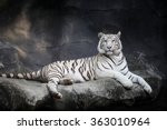 white tiger | Shutterstock . vector #363010964