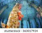 Black Rock Jetty  Underwater I...