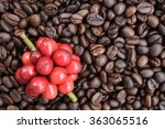 coffee beans ripening on dried... | Shutterstock . vector #363065516