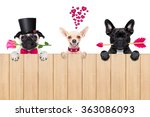 Stock photo team or group of dogs behind banner or placard wall of wood isolated on white background with 363086093