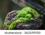 Green Moss On Old Wood