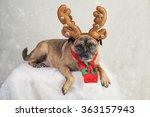 cute pug cross dog lying on... | Shutterstock . vector #363157943