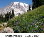 Trail At Mount Rainer ...