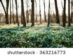 sunlit forest full of snowdrop... | Shutterstock . vector #363216773