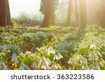 early spring snowdrops ... | Shutterstock . vector #363223586
