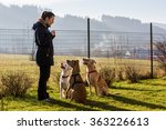 Stock photo woman instructing dogs outside 363226613