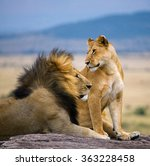 Big Male Lion With Gorgeous...
