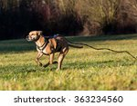 Stock photo brown mixed shelter dog 363234560