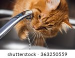 funny ginger cat drinking water ... | Shutterstock . vector #363250559