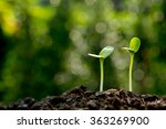 Green Sprouts Growing Out Fro...