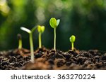 group of green sprouts growing... | Shutterstock . vector #363270224