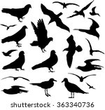 pigeons and seagulls | Shutterstock .eps vector #363340736