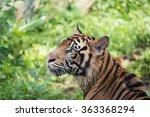 endangered animals of sumatran... | Shutterstock . vector #363368294
