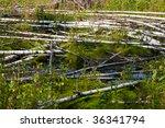 almost impassable bog with...   Shutterstock . vector #36341794