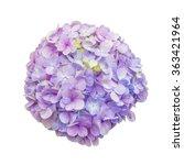 Purple Hydrangea Flower On...