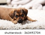 Cute Puppy Lying On Carpet At...