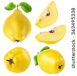 Isolated Quince. Collection Of...
