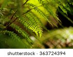 Close Up Detail Of Fronds On A...