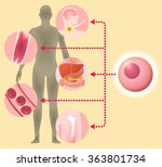 stem cell and regenerative... | Shutterstock .eps vector #363801734
