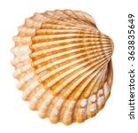 Clam Mollusk Shell Isolated On...