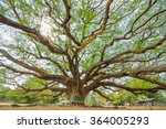big rain tree with branch... | Shutterstock . vector #364005293