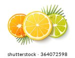vector set of citrus fruits.... | Shutterstock .eps vector #364072598