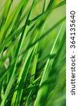 close on blade of grass under...   Shutterstock . vector #364135640