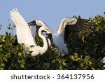 Great Egret And Wood Stork...