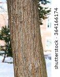 Tree Trunk Background  Oak Wood