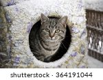 a feral cat finds shelter from... | Shutterstock . vector #364191044