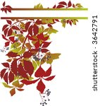 banner with vine   vector | Shutterstock .eps vector #3642791