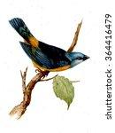 watercolor bird illustration | Shutterstock . vector #364416479