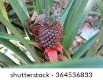 pineapple | Shutterstock . vector #364536833