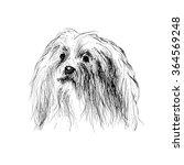 dog | Shutterstock . vector #364569248