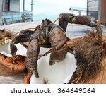 The Coconut Crab  Birgus Latro...
